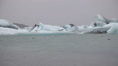 Iceland seals at Jokulsarlon - Seal group Stock Footage