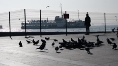 City birds, pigeons feeding,eating, flying public park, ferry landing silhouette Stock Footage