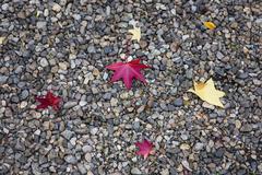 Maple leaf autumn season on stone texture floor Stock Photos