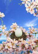 Stock Illustration of White egg in the nest on the almond tree