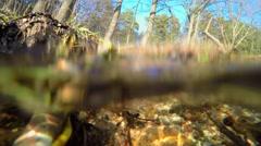 Spring brook Stock Footage