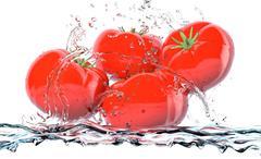 tomatoes - stock illustration
