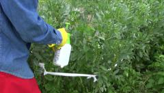 Gardener spraying bean plants with chemicals  in farm Stock Footage