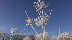 Beautiful New year winter  hoarfrost on wild plants Stock Footage