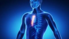 STERNUM bone skeleton x-ray scan in blue Stock Footage