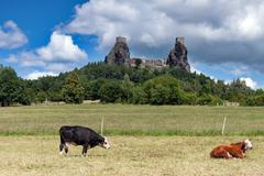 Czech Republic - stronghold Trosky in Cesky raj (Czech paradise) with cows Stock Photos