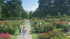 Tourists at the International Rose Test Garden, Portland Stock Footage