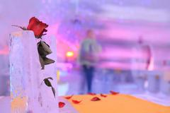Rose in ice inside an ice hotel Stock Photos