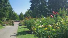 The beautiful International Rose Test Garden, Portland Stock Footage