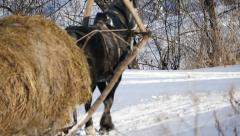 HD Stock Footage Rural Scene Horses Carry Hay in the Snow Stock Footage