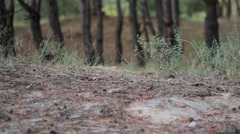 Feet of man in forest, wellies Stock Footage