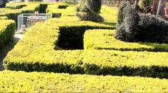 English green labyrinth Stock Footage
