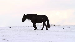 Friesian horse runs gallop in snow Stock Footage