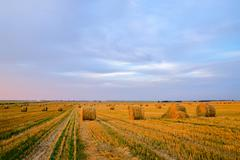 Bales of straw on the compressed field at sunset - stock photo
