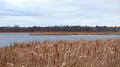 Bird sounds in Autumn Fall Season on a Marsh Migration Stock Footage