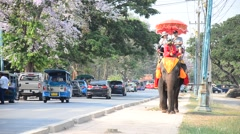 Foreigner and Traveler riding elephant for tour around  Ayutthaya ancient city - stock footage