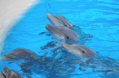 Funny Dolphins Kuvituskuvat
