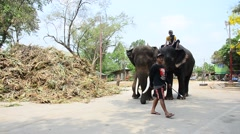 Mahout Thai  people riding and teach elephat in Ayutthaya, Thailand Stock Footage