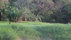 Honduran jungle Stock Footage