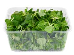 Greens in the container. - stock photo