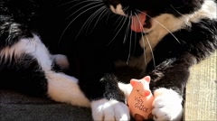 Good luck, cat keeps happiness pig with the talons Stock Footage