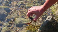 Man releases the crab in to water Stock Footage