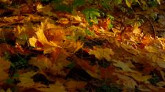 Multi Colored Autumn Trees - stock footage