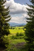Coniferous tree in a panoramic valley Stock Photos