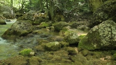 Forest tourst in gather Stock Footage