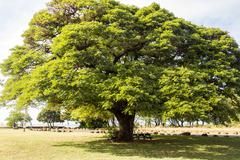 Tree with shade in park Stock Photos