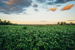 Crop field under sunrise sky in rural landscape Stock Photos