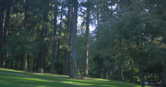 Beautiful afternoon in the forest park in Portland, Oregon Stock Footage