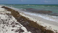 Seaweed Bloom on Beach Stock Footage