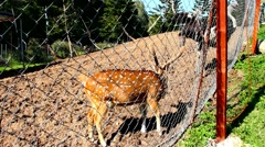 spotted deer and ostrich in the aviary - stock footage