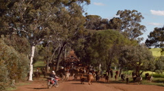 Mustering Cattle Along a Dirt Road in Australia Stock Footage