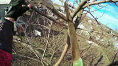 Pruning trees Stock Footage