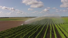 Farm sprinkler or water cannon watering bright green string bean crops Stock Footage