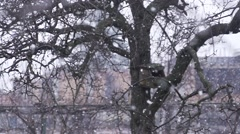 Large snowflakes falling in slow motion over old wood Stock Footage