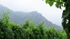 Wine Farm, Stellenbosch v04 Stock Footage