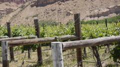 Colorado Wine vineyard #1 Stock Footage