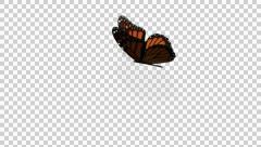 Animation Butterfly Alpha Channel Looped 19 Stock Footage