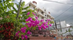 Close Up Shot of Bougainvillea Flowers in Front of a Building in Penang Stock Footage