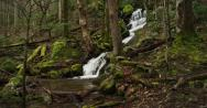 Stock Video Footage of Great Smoky Mountains National Park, stream in woods