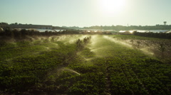Palestine Sprinklers Time-lapse - stock footage