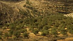 Palestine Olive Farm Time-lapse Stock Footage