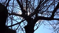 Sun Light Through Tree Branch. 4k Ultra HD Stock Footage