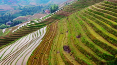 Guilin Rice Terraces - stock footage