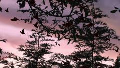 Birds take flight in the evening sky Stock Footage