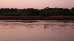 African skimmer bird Stock Footage