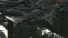 Crocodiles at Blue Sky Crocodile Land in Long Xuyen Vietnam Stock Footage